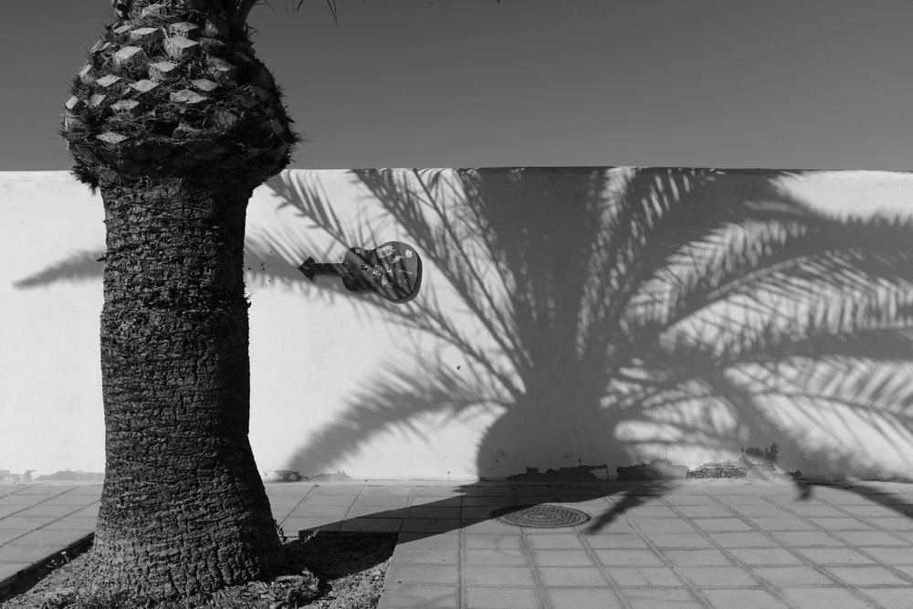Palm o' Clock.jpg