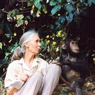 The least I can do is speak out for those who cannot speak for themselves. - Jane Goodall #crueltyfree #animalactivist #naturalbeauty #janegoodall #stopanimaltesting