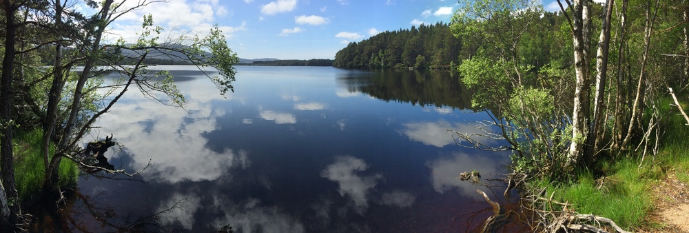 Loch Garten 18th June 2016