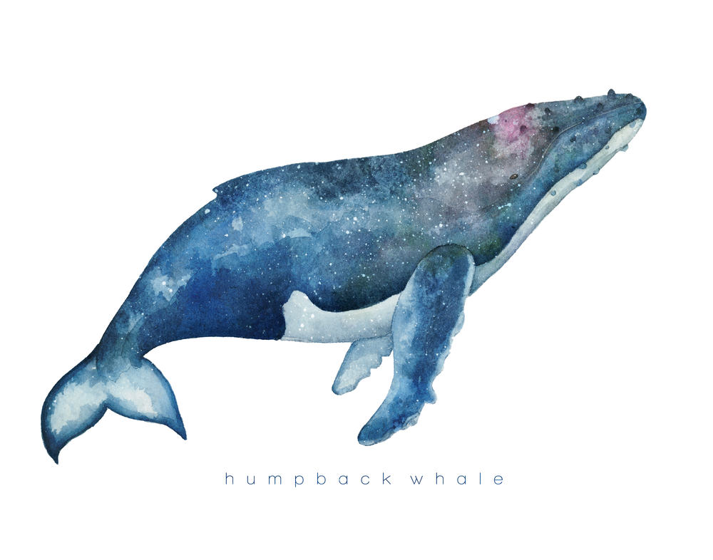 SpaceWhale.png