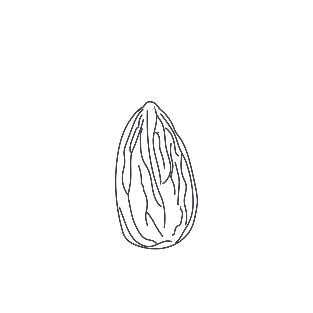 nut-Icon14.jpg