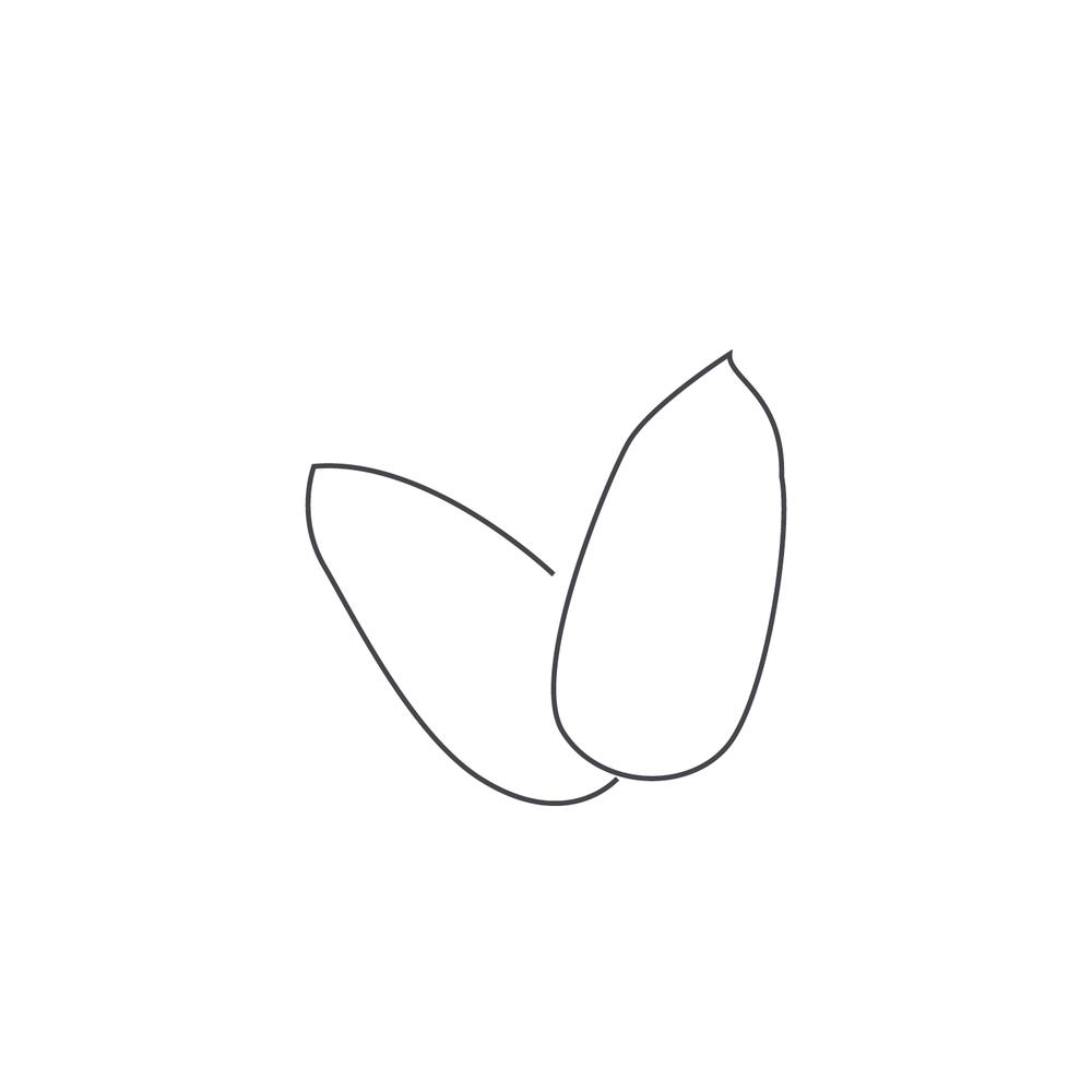 nut-Icon41.jpg
