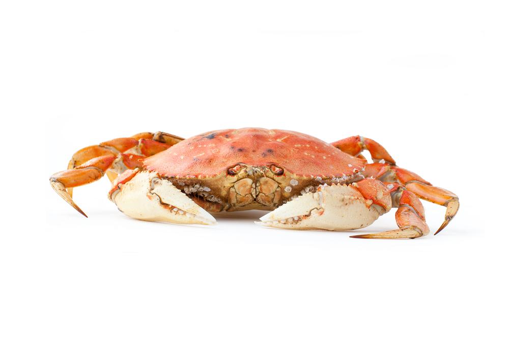 deact_crab1_er.jpg