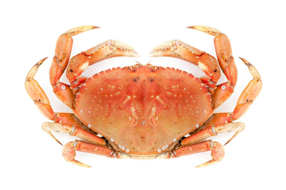 deact_crab2_er.jpg