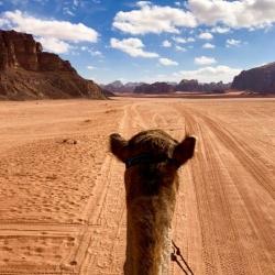 Wadi Rum Nature Tours - Camel Tour