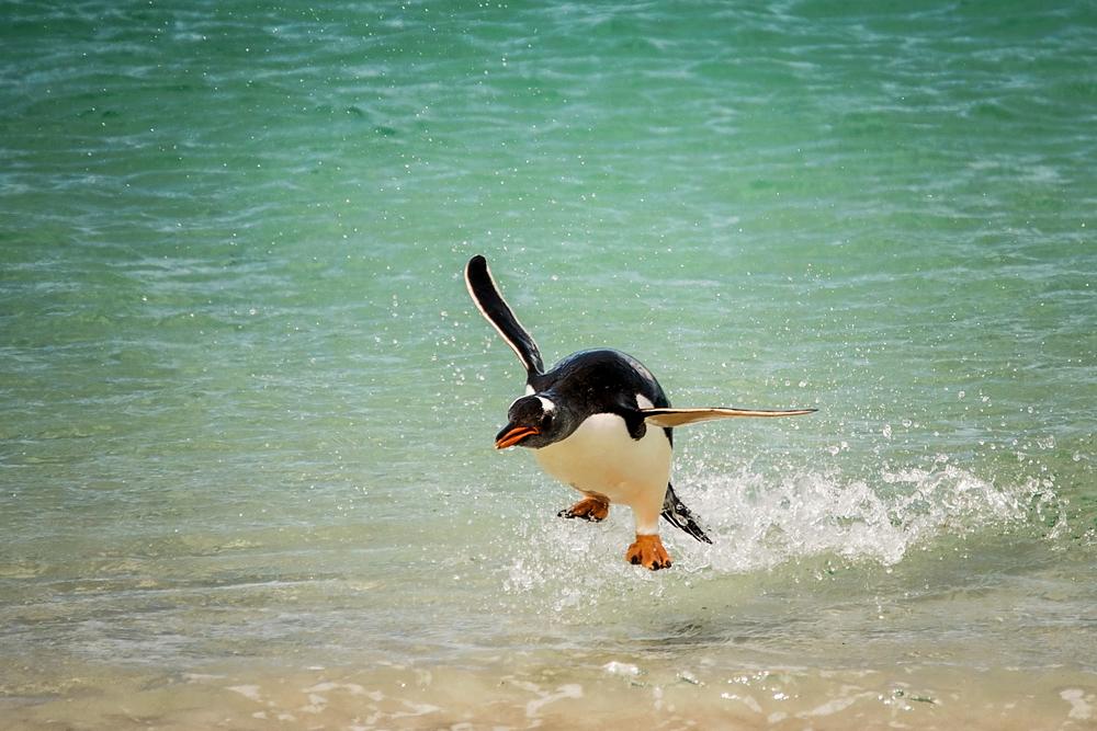 KathleenHertelPhotography-AntarcticaPenguins-29.JPG