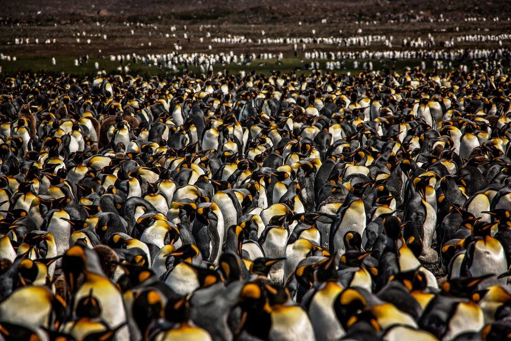 KathleenHertelPhotography-AntarcticaPenguins-82.JPG