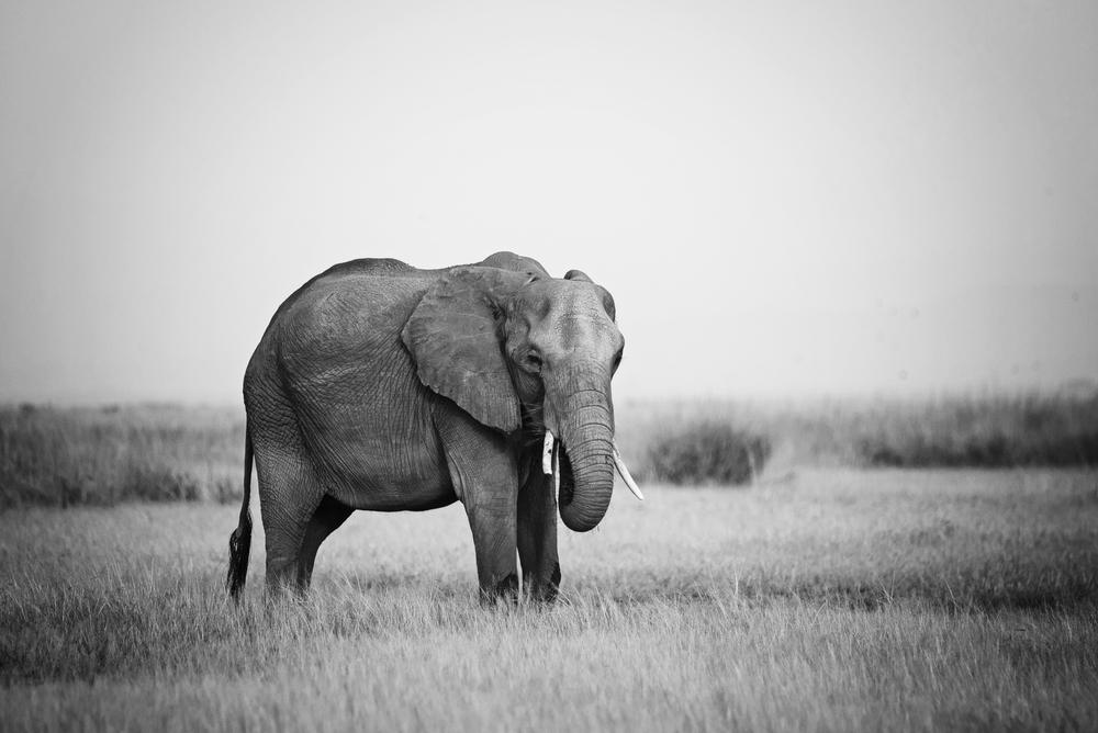 Kenya Nairobi National Park Amboselli Masai Mara