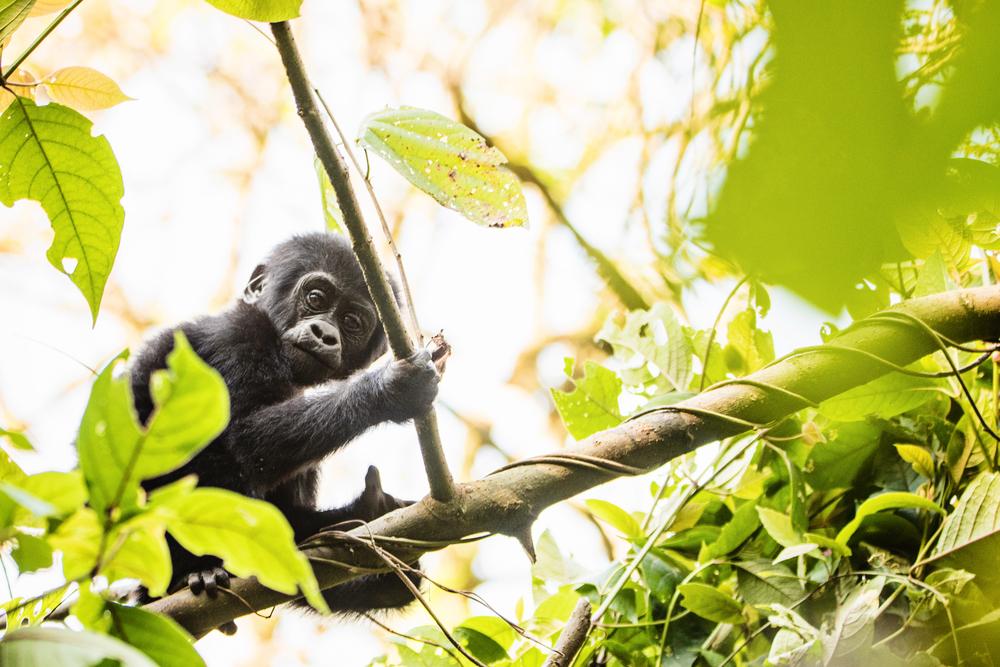 Uganda Bwindi National Park Kibale National Park Queen Elizabeth National Park