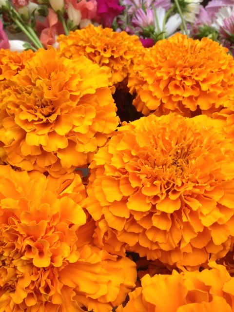 orange jedi marigold.JPG
