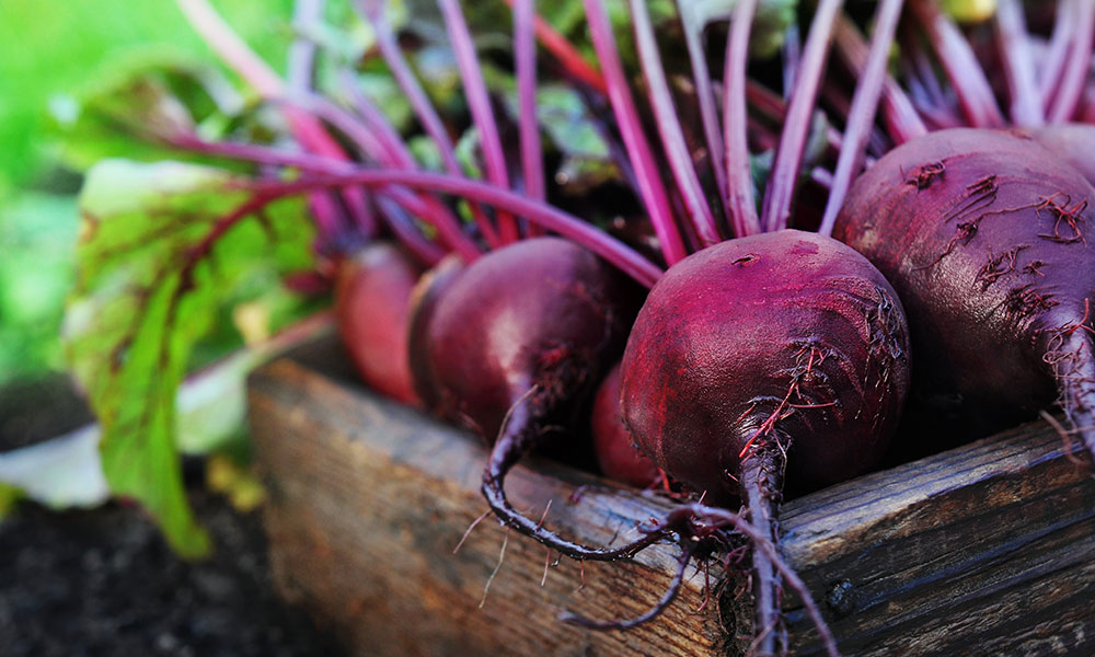 beetroot_photo.jpg