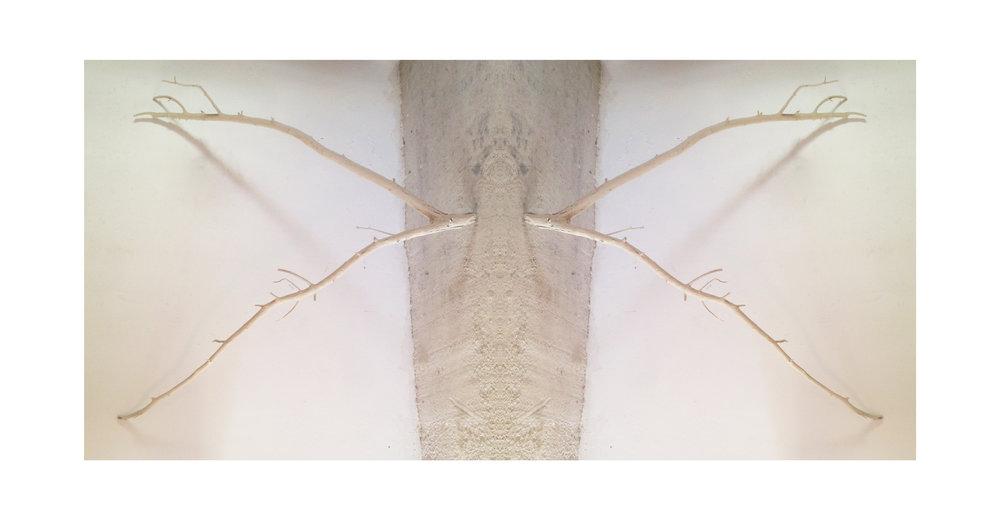 antlers3.jpg