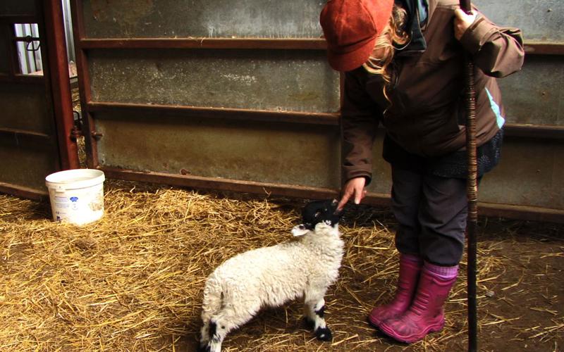 sheepfeed.jpg