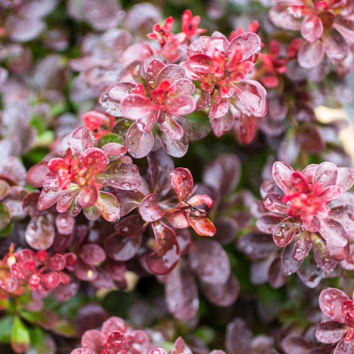shrubs-2.jpg
