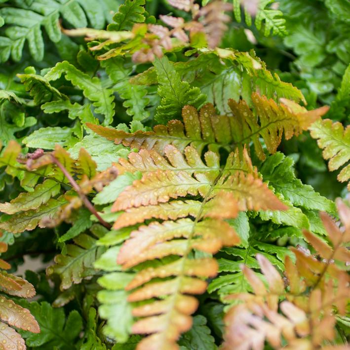 shrubs-5.jpg