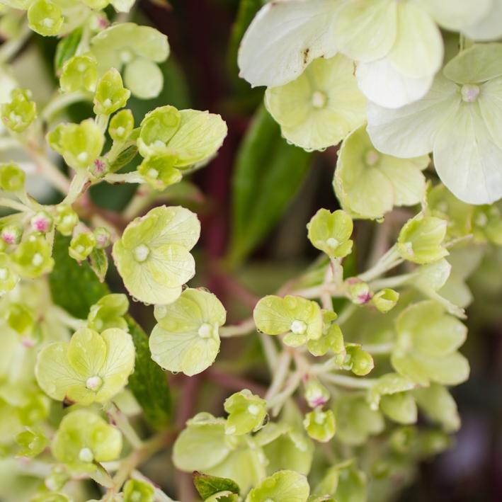shrubs-8.jpg