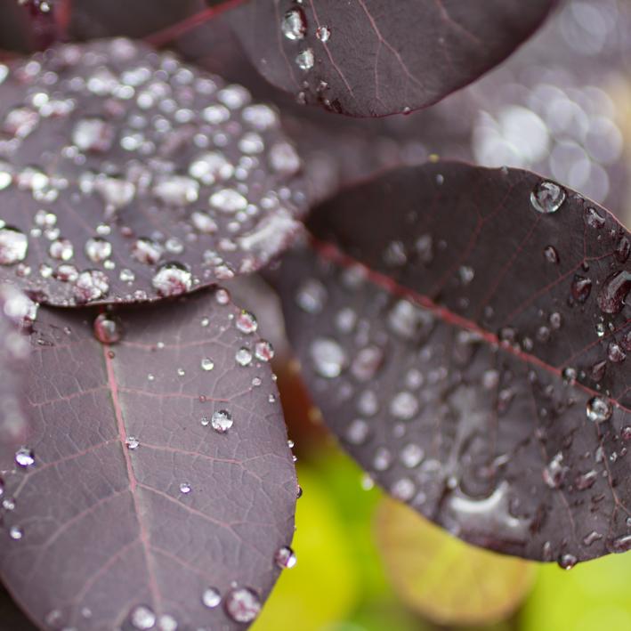 shrubs-9.jpg