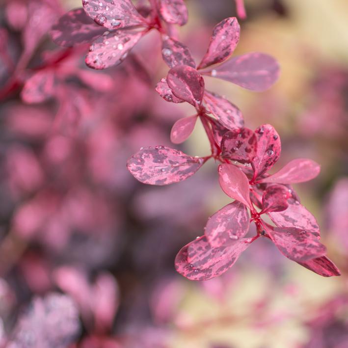 shrubs-15.jpg