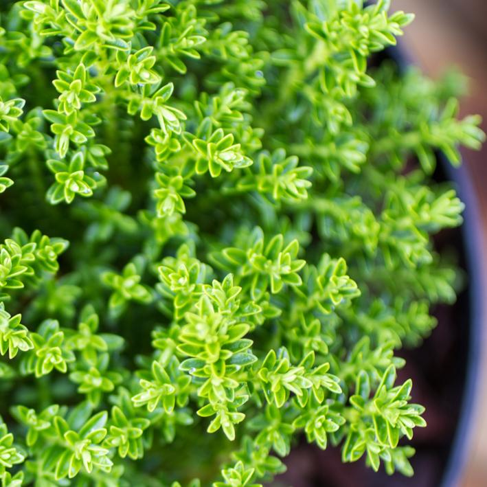 shrubs-16.jpg