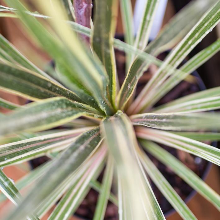 shrubs-6.jpg