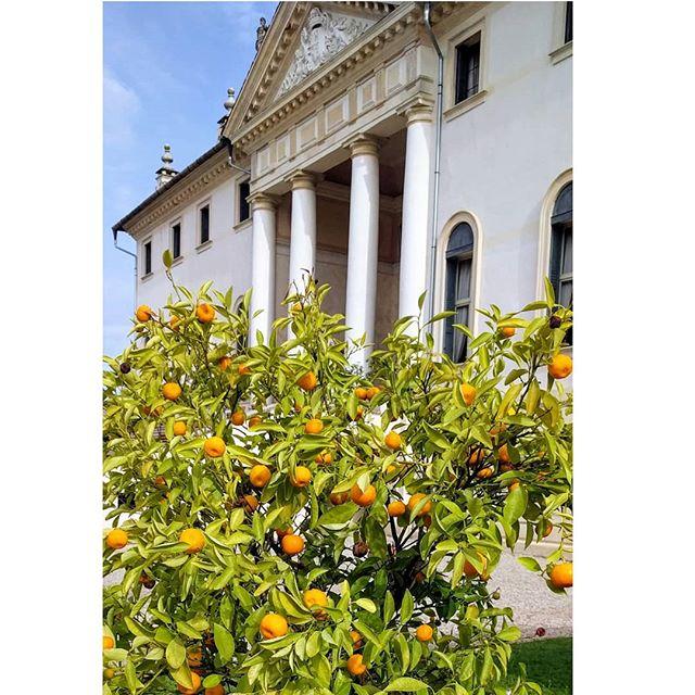🍊🍊🍊 orange perfection #mbunju #fashiontravel #italy #gardening #travel #traveldeeper #businesstravel #orange