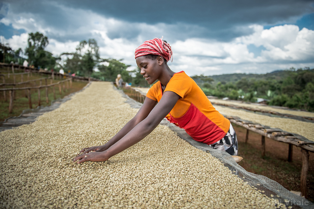 Green Coffee Beans, Ethiopia