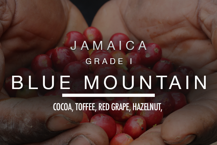 Jamaica Blue Mountain Grade 1 100g 2019 Buy Coffee Online Bespoke Roasts Free Delivery