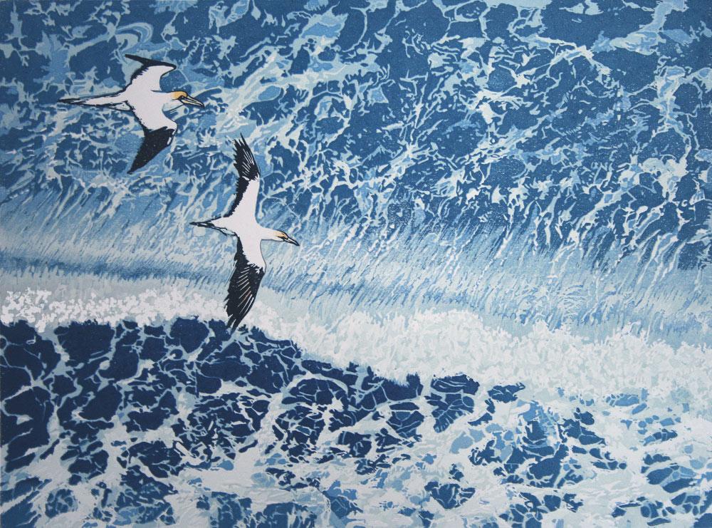 Gannets.jpg