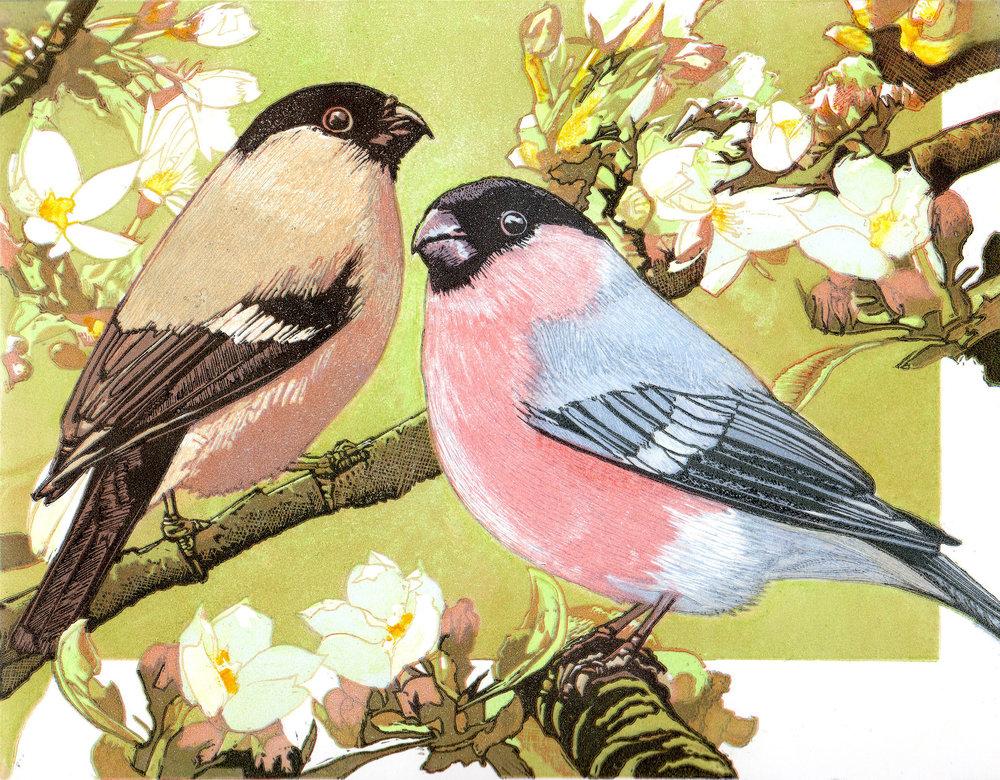 Bullfinches.