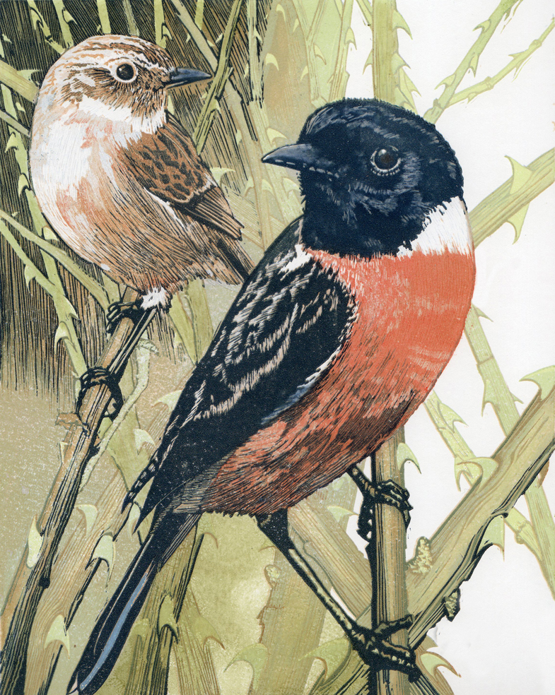 stonechats reduced.jpg