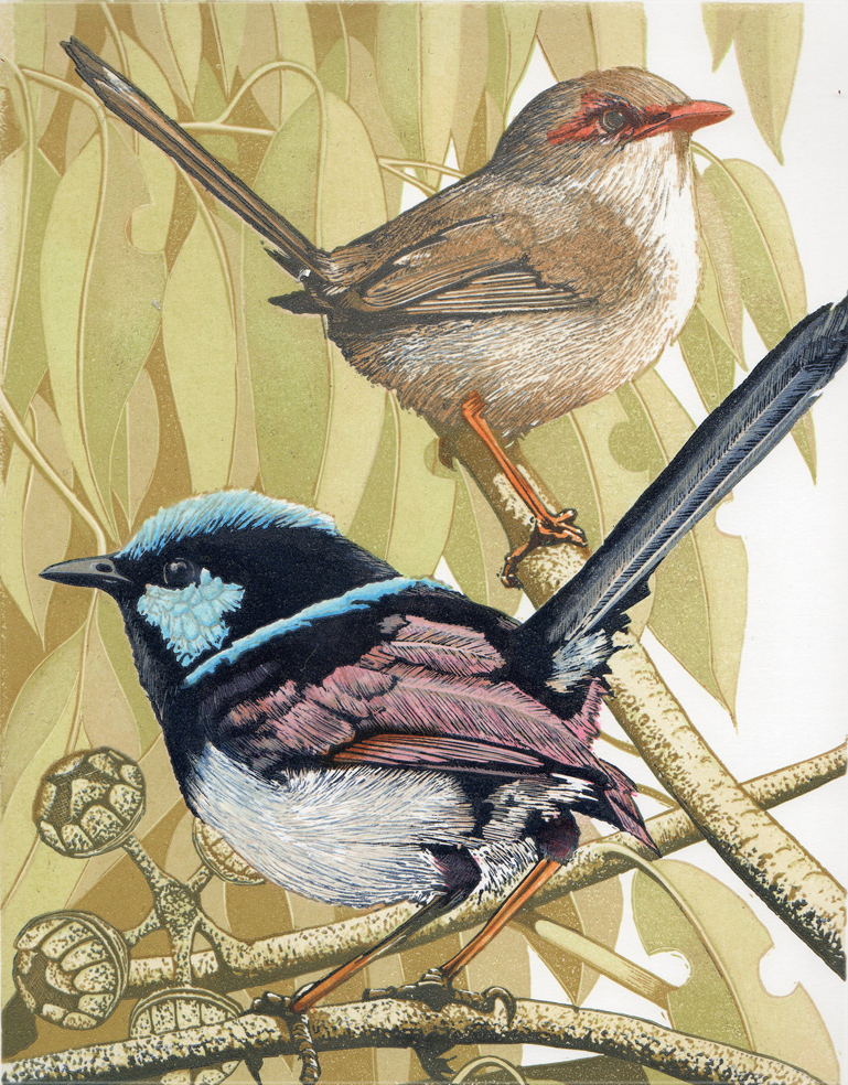 Australian Superb Fairy Wrens