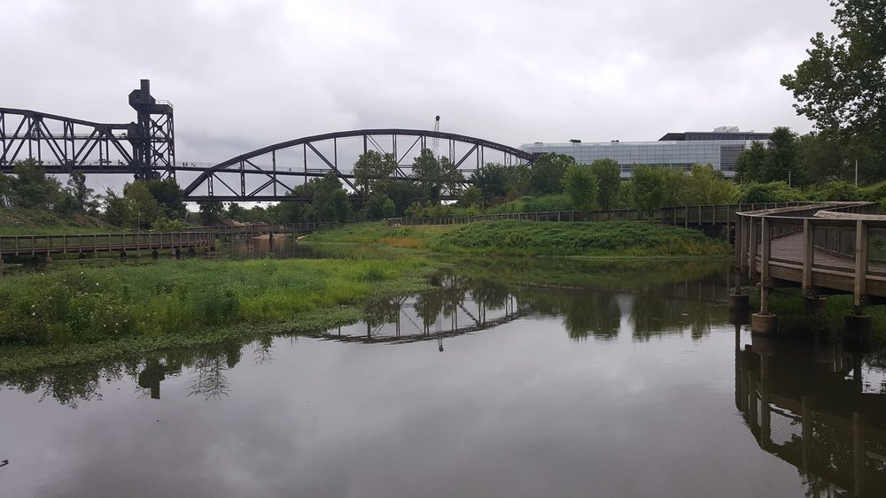 The Bill Clark urban wetland was created in a polluted backwater adjacent to the Library. The area is kept pristine and teeming with wildlife via collection baskets and settling ponds that harness debris carried in the storm sewers draining to the pond.