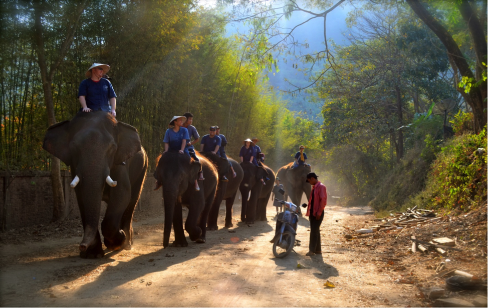Dennis Senemuongdong went for an elephant ride in Thailand.