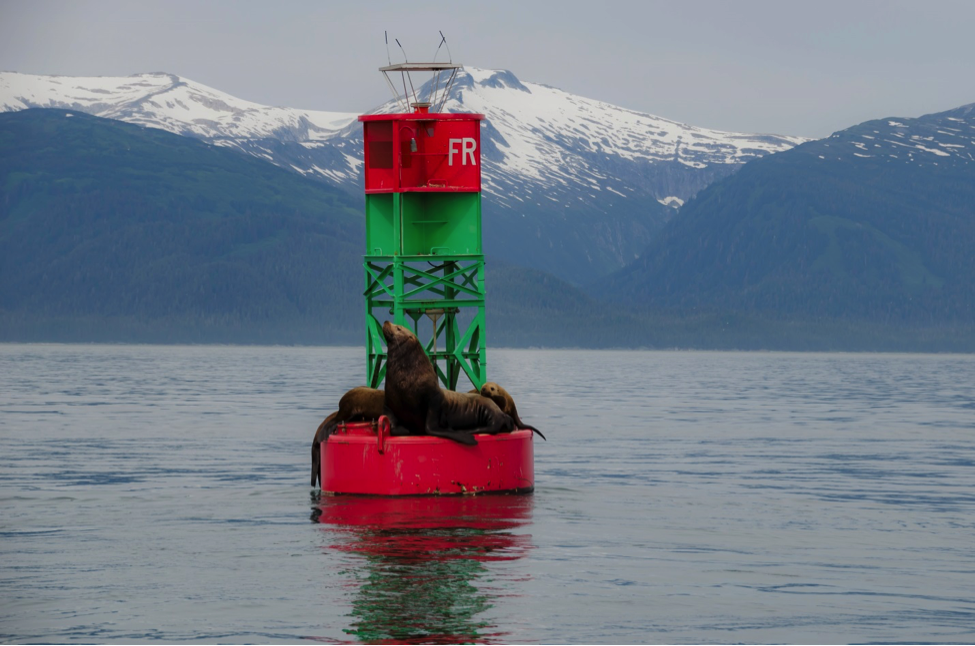 Julie Dannhauser and her family went on an Alaskan cruise and spotted some sea lions lounging around Juneau.