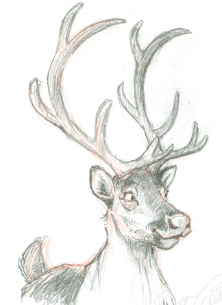 Reindeer Drawings - 9 NEW!