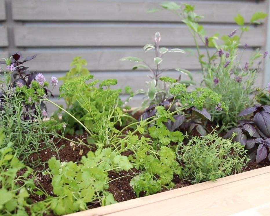 Patio Container Gardening - MINIMAL EFFORT / BIG RETRUN