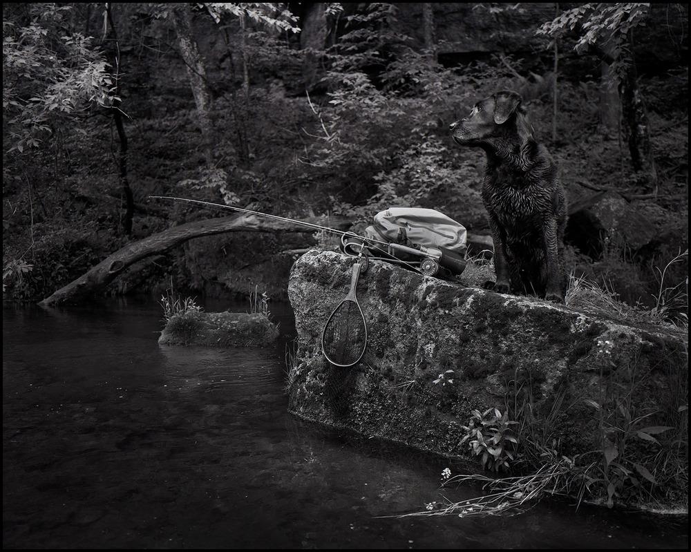 Moose on a rock