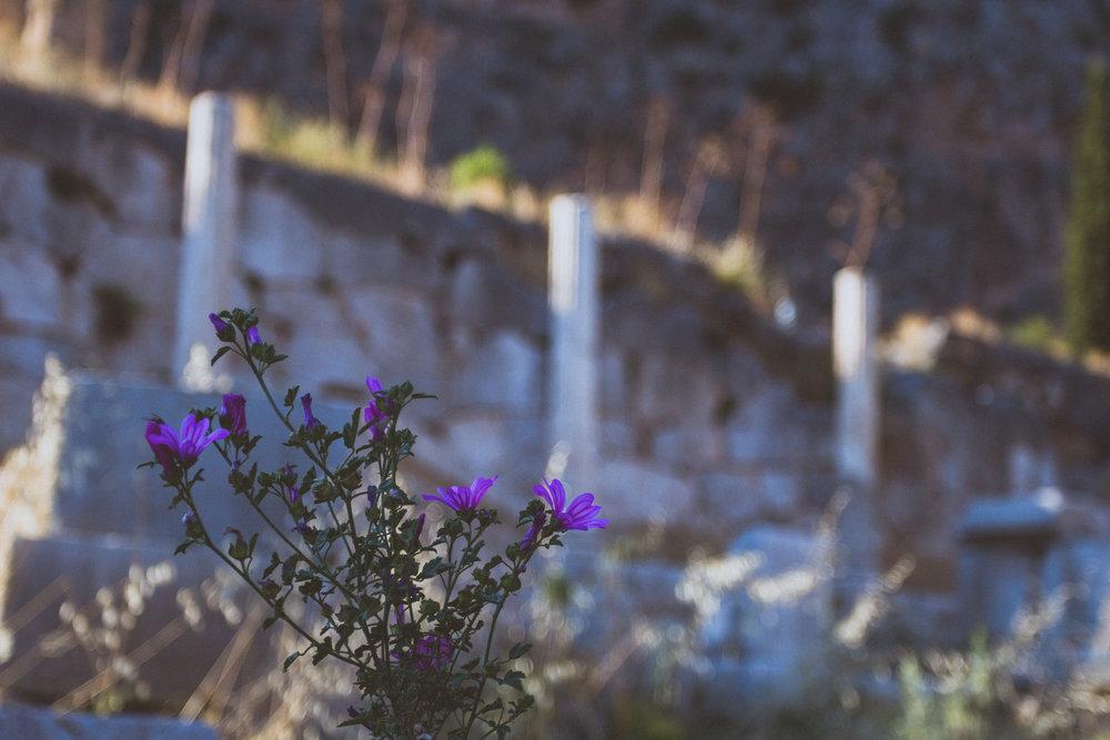Day 5 - Delphi (32 of 49).jpg