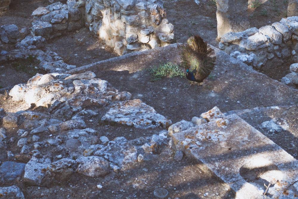 Day 10 - Crete (1 of 8).jpg