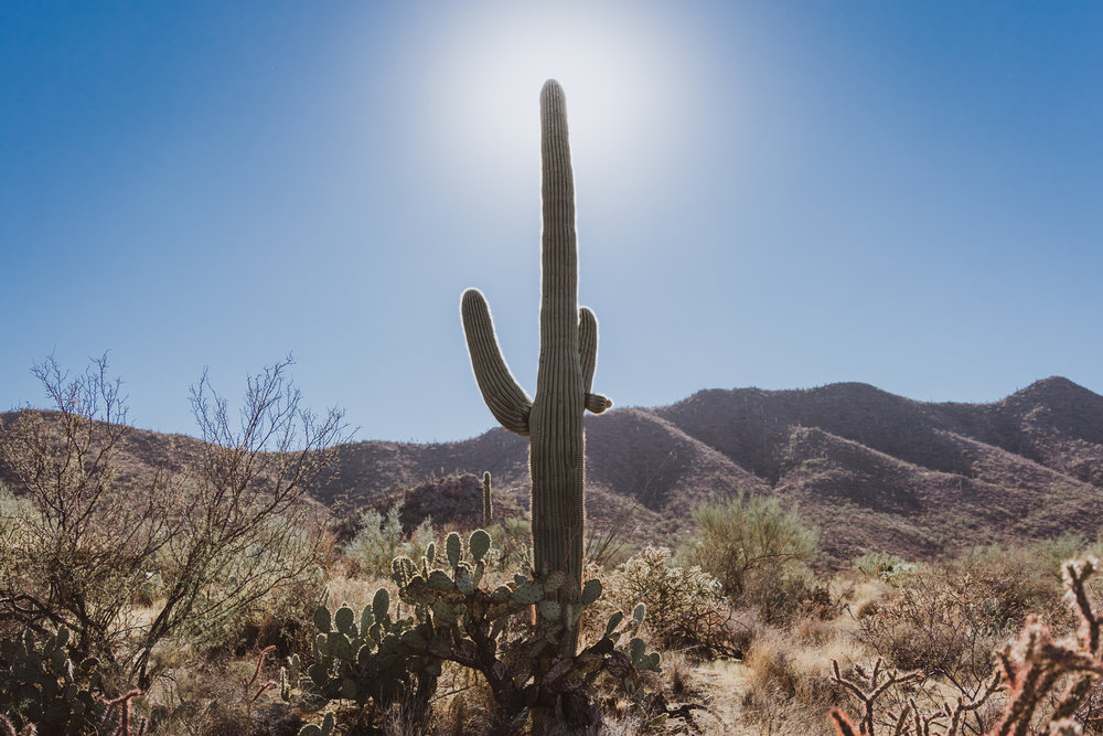 Saguaro Edits (1 of 1).jpg