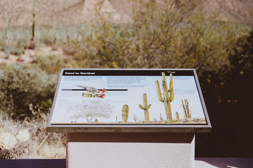 Saguaro Edits (12 of 160).jpg