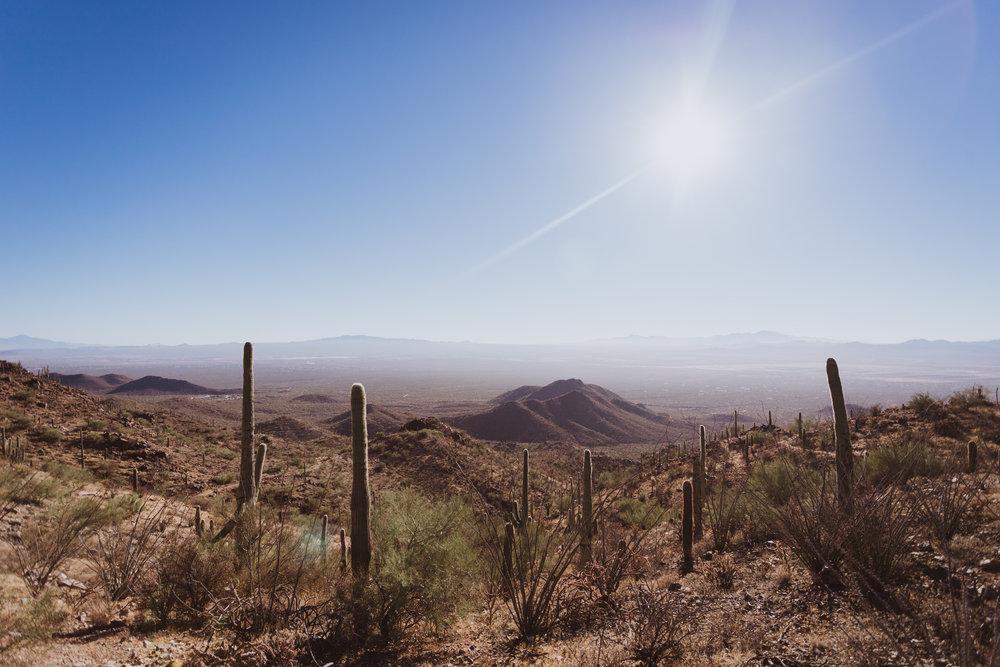 Saguaro Edits (95 of 160).jpg