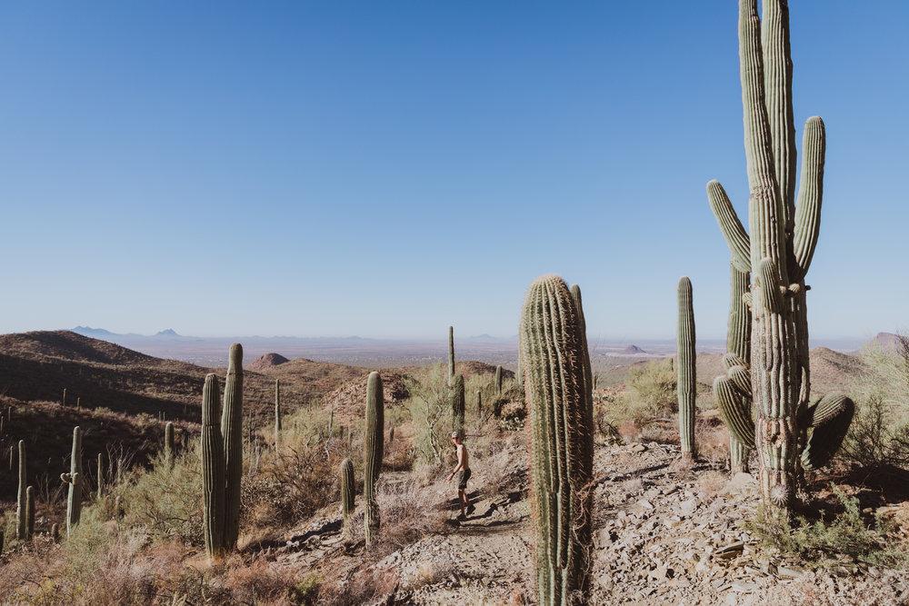 Saguaro Edits (119 of 160).jpg