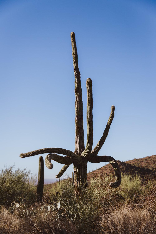 Saguaro Edits (143 of 160).jpg