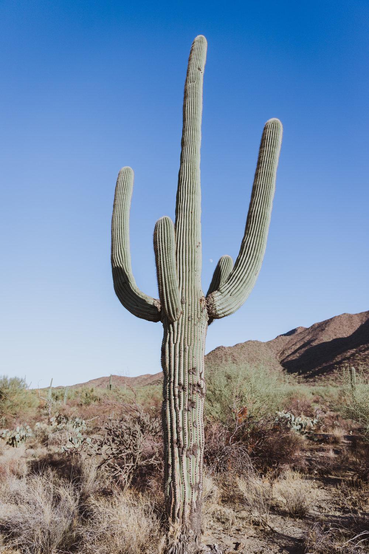 Saguaro Edits (141 of 160).jpg