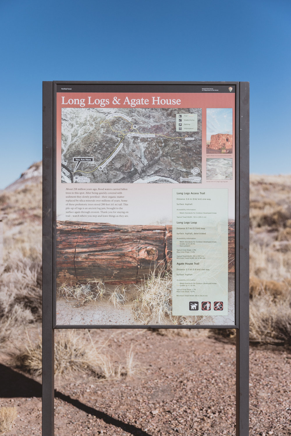 Petrified Forest (47 of 149).jpg