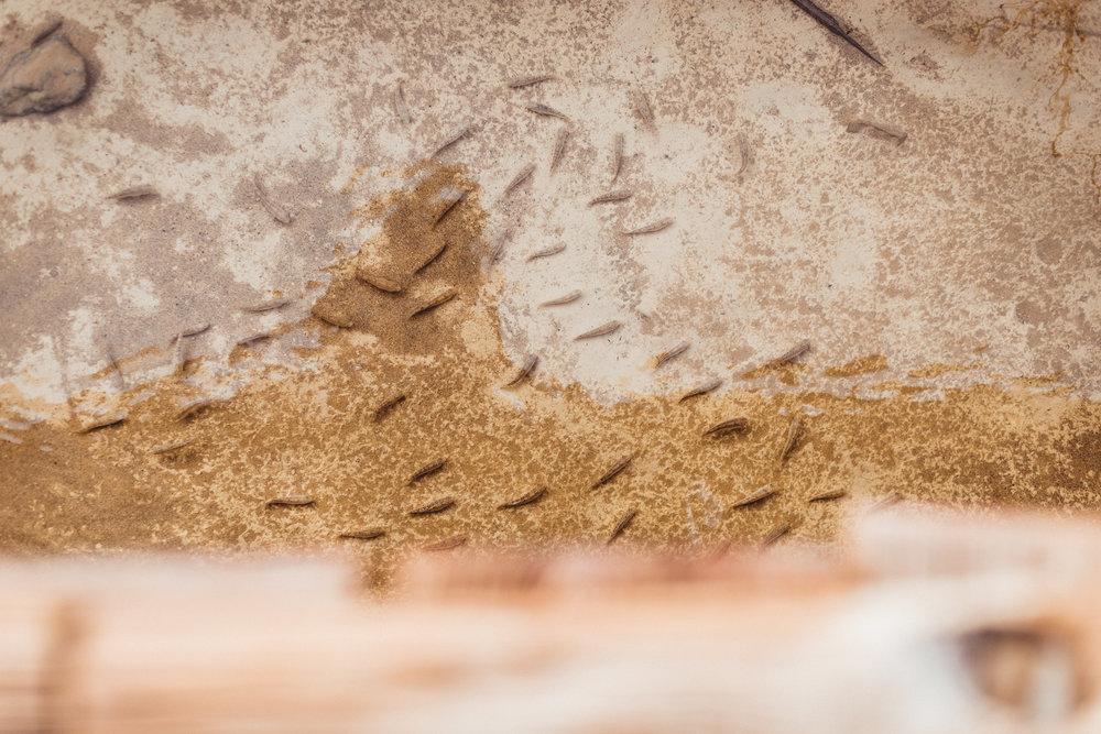 Death Valley Edits (149 of 203).jpg