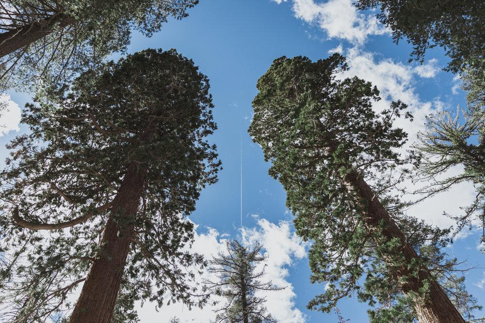 Yosemite Edits (191 of 215).jpg