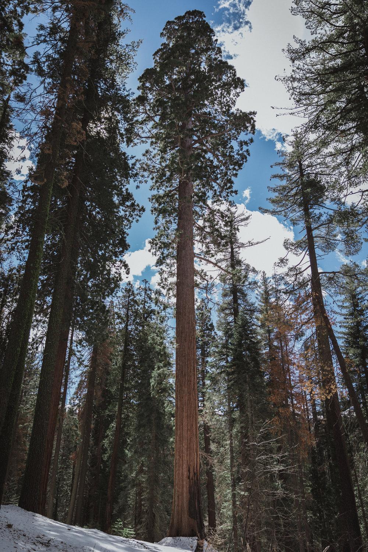 Yosemite Edits (188 of 215).jpg