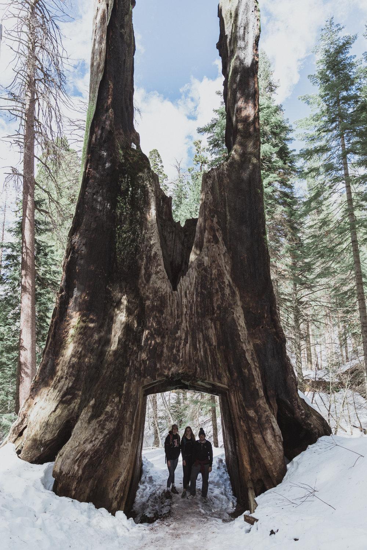 Yosemite Edits (198 of 215).jpg